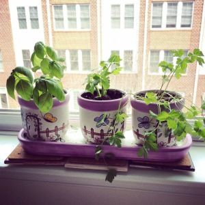 Window sill garden